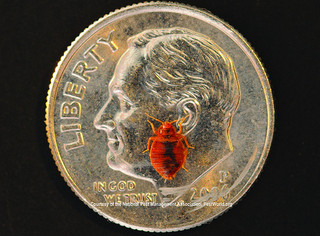 Bed Bug Pictures