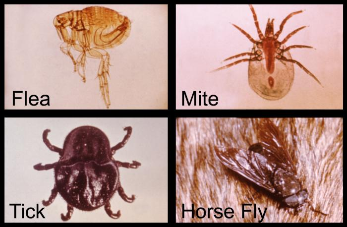 Dust Mite Bed Bug Difference