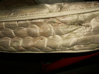 side view of a bed bug infested mattress