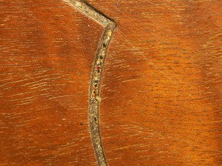 signs of bedbugs in wood furniture