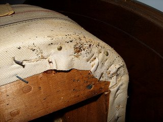 bed bug infested box spring - head